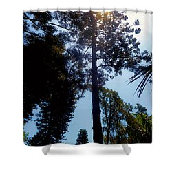 Up In The Sky Trees Shower Curtain