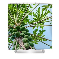 Up The Papaya Shower Curtain by Denise Bird