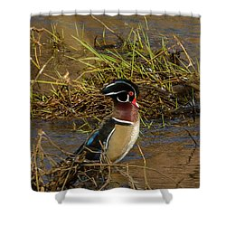 Upright Wood Duck Shower Curtain