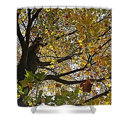 Upward Shower Curtain by Jana E Provenzano