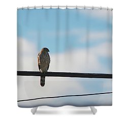 Urban Hunter Shower Curtain by David S Reynolds