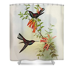 Urochroa Bougieri Shower Curtain by John Gould