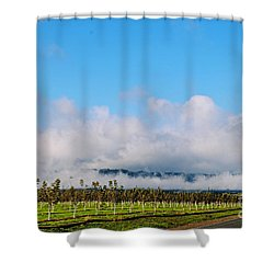 Vacaville Orchard Shower Curtain