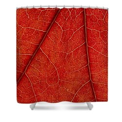 Shower Curtain featuring the photograph Vains by Chevy Fleet