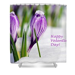 Valentines Day Crocuses Shower Curtain