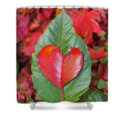Valentine's Day Nature Card Shower Curtain by Debra Thompson