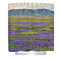 Valley Phacelia And Caliente Range Shower Curtain by Marc Crumpler