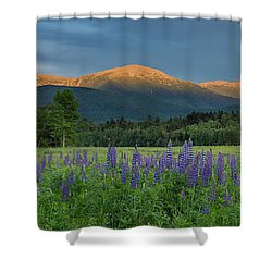 Valley Way Lupine Sunset Shower Curtain