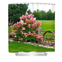 Vanilla Strawberry Hydrangea Shower Curtain by Randy Rosenberger