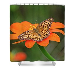 Variegated Fritillary On Flower Shower Curtain by Ronda Ryan