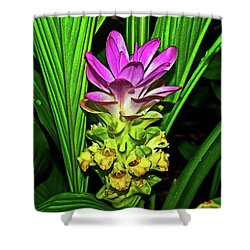 Variegated Hidden Ginger 001 Shower Curtain