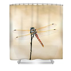 Shower Curtain featuring the photograph Varigated Meadowhawk Dragonfly Sympetrum Corruptum by Frank Wilson