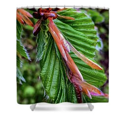 Beech  Shower Curtain