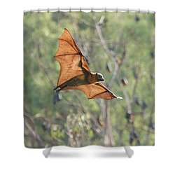 Veins In The Wings Shower Curtain by Craig Dingle