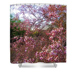 Vekol Wash Desert Ironwood In Bloom Shower Curtain