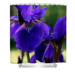 Shower Curtain featuring the photograph Velvet And Silk by Hanne Lore Koehler
