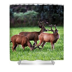 Velvet Antlers In The Sunset Shower Curtain