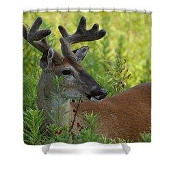 Velvet Buck Shower Curtain