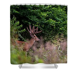 Velvet Crown Shower Curtain