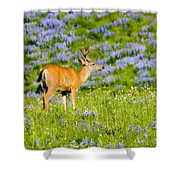 Velvet On Lupine Shower Curtain by Mike  Dawson