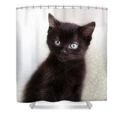 Shower Curtain featuring the photograph Velvet - Square Version by Amy Tyler