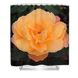 Velvety Orange Rose Shower Curtain by Teresa Schomig