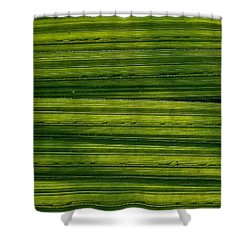 Venetian Blinds Shower Curtain by Tim Good