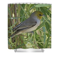 Verdin In Tree Shower Curtain by Anne Rodkin