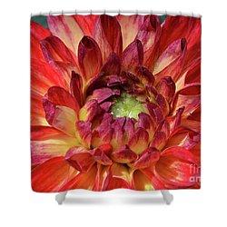 Variegated Dahlia Beauty Shower Curtain