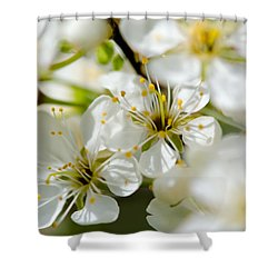 Vermont Apple Blossoms Shower Curtain
