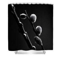 Vernal Awakening Shower Curtain by Susan Capuano