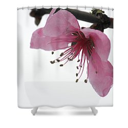 Shower Curtain featuring the photograph Vernally by Silke Brubaker