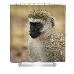 Shower Curtain featuring the photograph Vervet Monkey by Ramabhadran Thirupattur