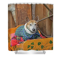 Shower Curtain featuring the photograph Very Old Pet Dog In Clothes On Own Bed by Patricia Hofmeester