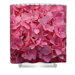 Very Pink Hydrangea Blossoms 2578 H_2 Shower Curtain
