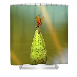 Very Small Dragonfly In Vertical Position Shower Curtain