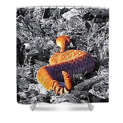 Vibora Shower Curtain