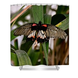 Vibrant Butterfly Shower Curtain