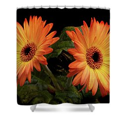 Vibrant Gerbera Daisies Shower Curtain by Terence Davis