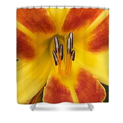 Vibrant Lilly Shower Curtain by Tiffany Erdman