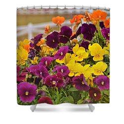 Vibrant Violas Shower Curtain by JAMART Photography