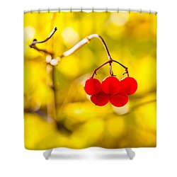 Shower Curtain featuring the photograph Viburnum Berries - Natural Olympic Emblem by Alexander Senin