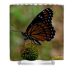 Viceroy Butterfly Shower Curtain by Donna Brown