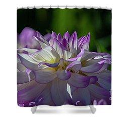 Victoria Ann Dahlia 2 Shower Curtain