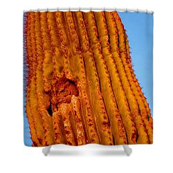 Victor's Golden Hour Shower Curtain