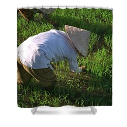 Vietnam Paddy Fields Shower Curtain