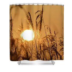 View Of Sun Setting Behind Long Grass B Shower Curtain