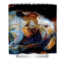Vilano Sea Shell Constellation Shower Curtain