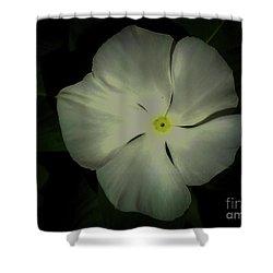 Vinca Bloom Night Glow Shower Curtain