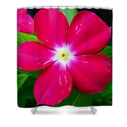 Vinca Flower Shower Curtain by Lanjee Chee
